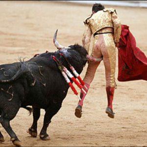 Španělské býčí zápasy vznikly jako oslava tradičního přípravku na vlasy: býčí koule.