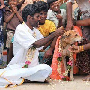 Muž se v Indii jako symbol smíření oženil s fenou.
