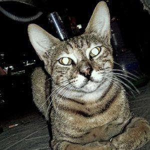 Ve starověkém Egyptě zabití kočky - i neúmyslné - znamenalo trest smrti.