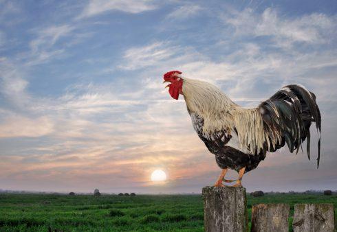 Proč to mají ranní ptáčata lepší?