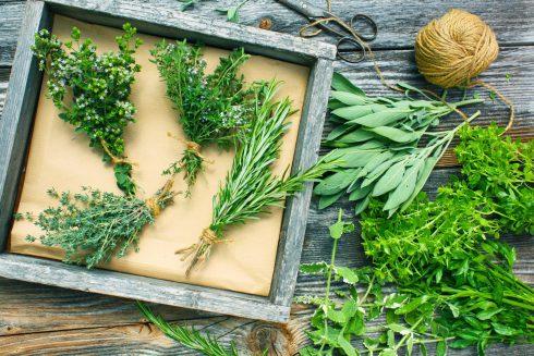 Léčivé byliny v nejstarších mýtech: andělika, zeměžluč i badyáník