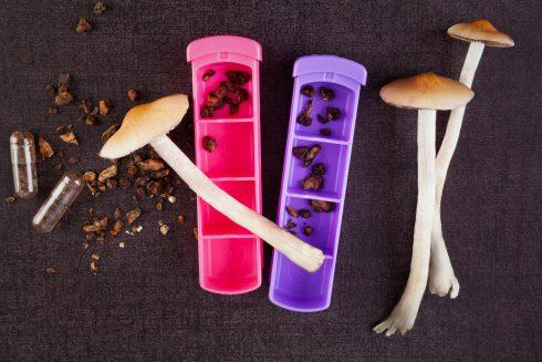 Pomáhají houbičky léčit depresi?