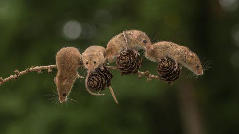 Naděje pro ochrnuté: vědci přeučili neurony ochrnutých myší